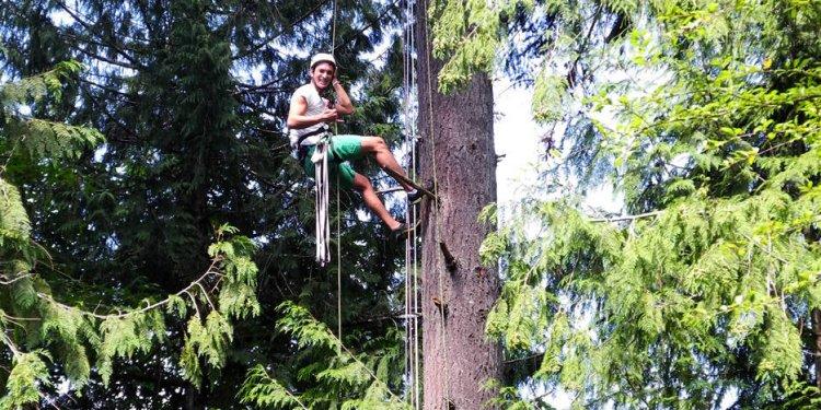 Island canopy tree climb