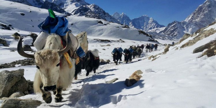 Yaks move toward the Mount