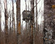 Old Man Climbing Tree stand